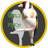 Master Kicau Goldfinch icon