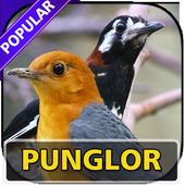 Kicau Pemaster Punglor Lengkap icon