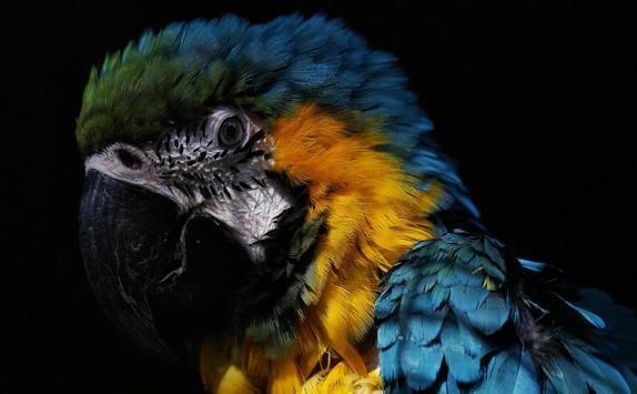 Best Animals HD  Wallpapers screenshot 15