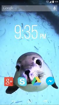 Cute Seal Live Wallpaper poster