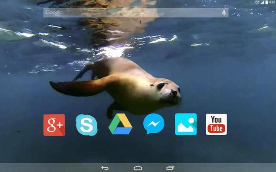 Cute Seal Live Wallpaper apk screenshot