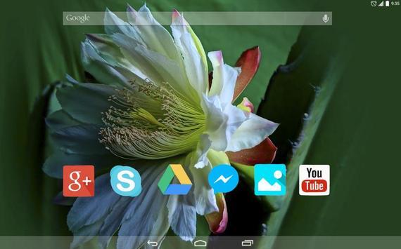 Cactus Flower Live Wallpaper apk screenshot