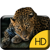 Funny Cheetah Live Wallpaper icon