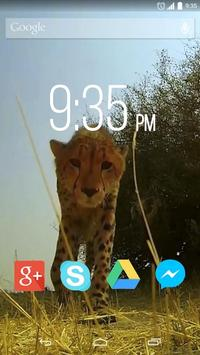 Funny Cheetah Live Wallpaper poster