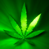 Marijuana Live Wallpaper icon