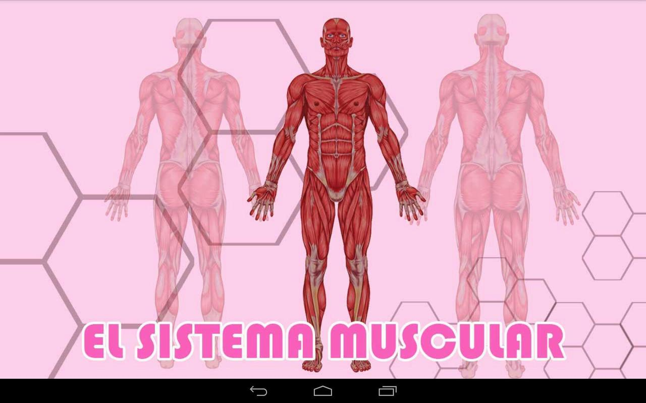 El Sistema Muscular APK Download - Free Education APP for Android ...