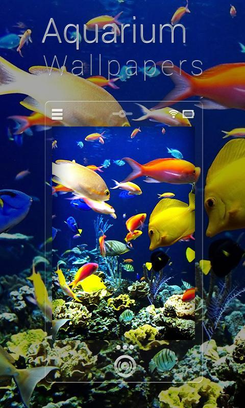 fish aquarium live wallpapers apk download free