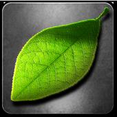 Fresh Leaves icono