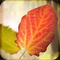 Falling Leaves 3D Live Wallpaper