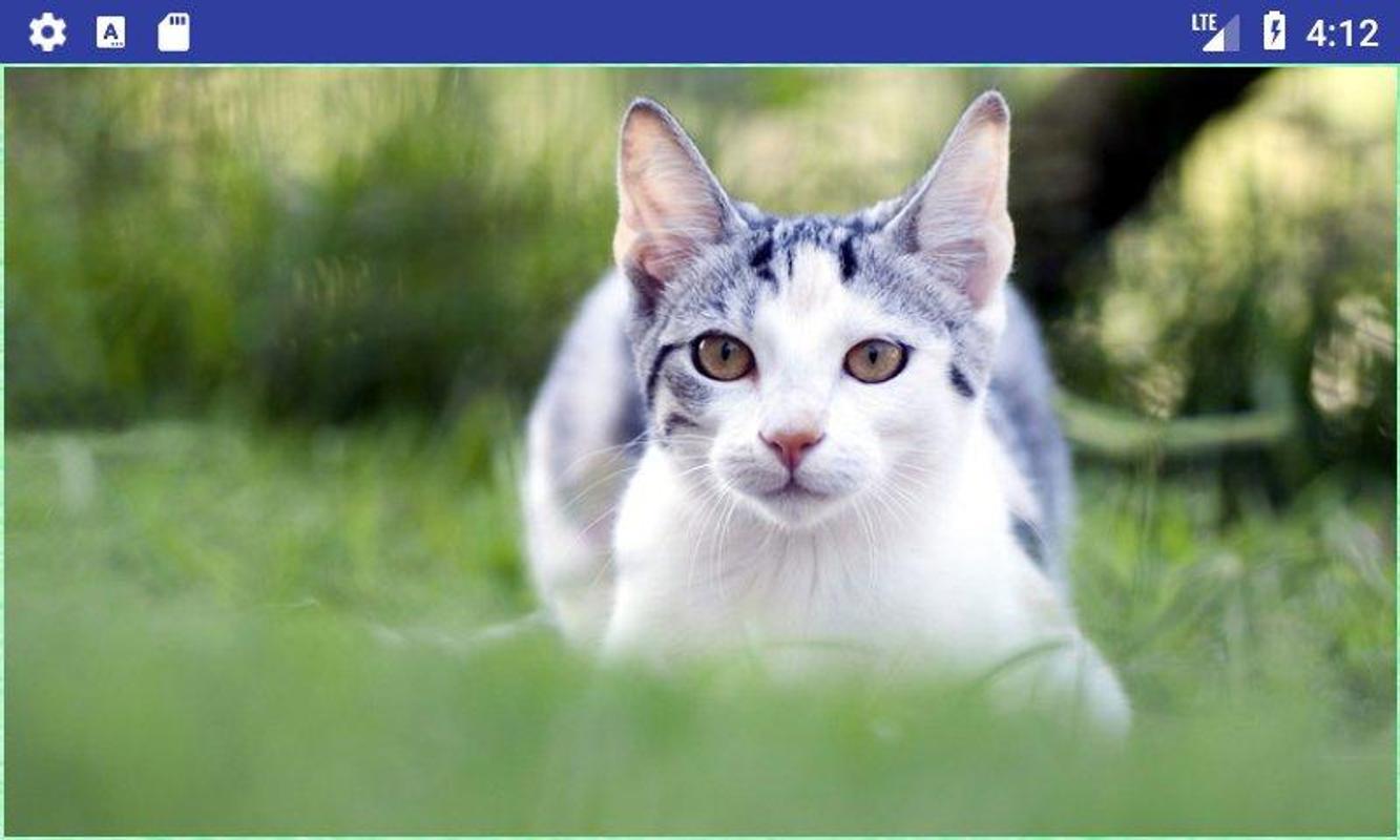 Beautiful Cats Wallpapers Apk Screenshot