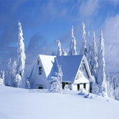 Best Winter Wallpapers icon