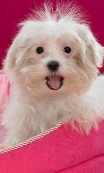 Beautiful Funny Dog HD Themes poster