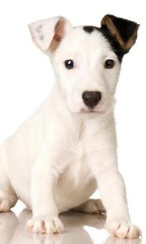 Beautiful Funny Dog HD Themes apk screenshot