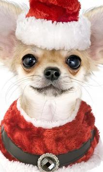 Christmas Dog HD Themes Wallp poster