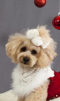 Christmas Dog HD Themes Wallp apk screenshot