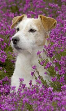 Dog Lovely Wallpapers Theme apk screenshot