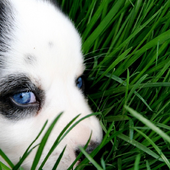 Dogs Best HD Themes icon