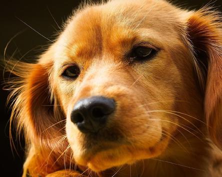 Dogs Best HD Themes apk screenshot