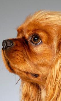 Dogs in the Photostudios Wallp apk screenshot