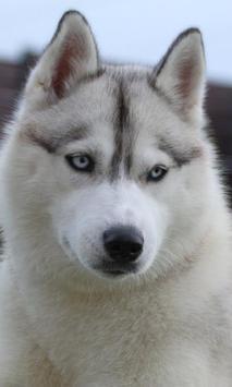 Many Dogs Themes apk screenshot