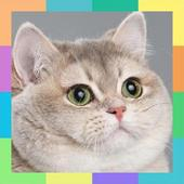 Kitty Cat Sounds icon