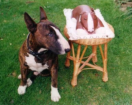 Imagenes Bull Terrier apk screenshot