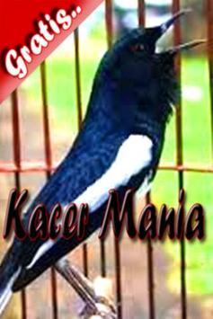 Kacer Mania poster