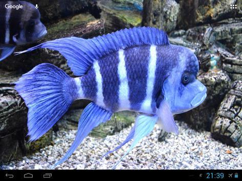 Sea Corals And Fish Wallpaper screenshot 1