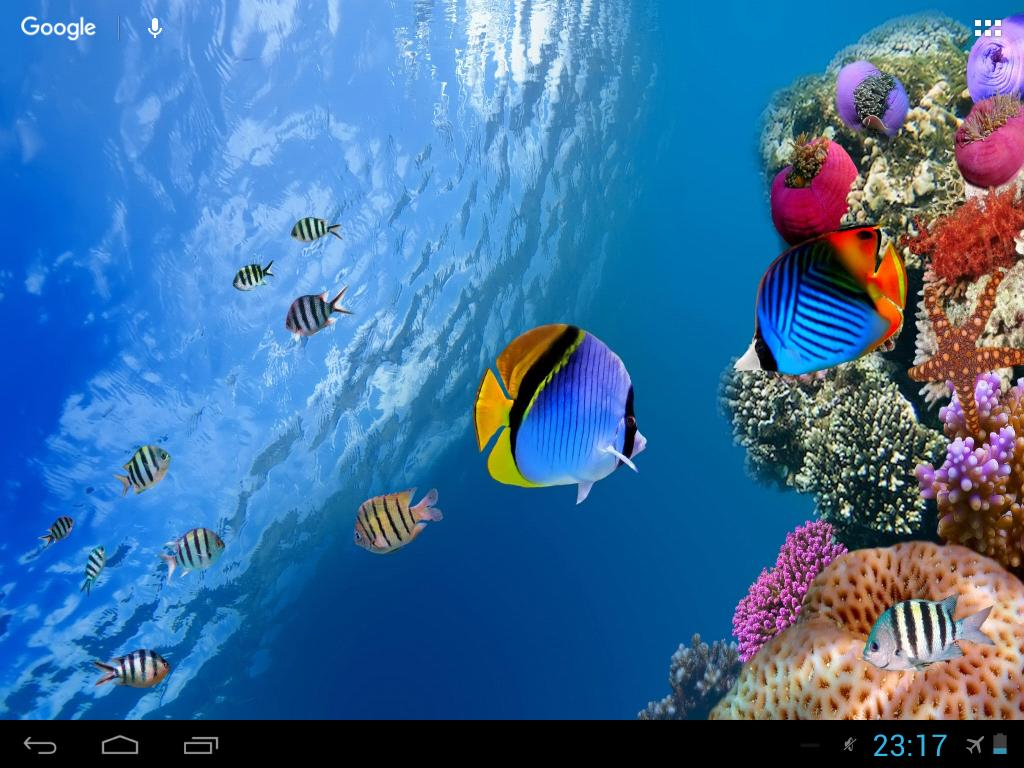 Sea Fish Wallpaper For Android Apk Download