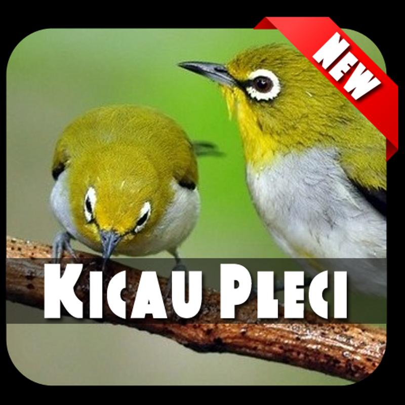 Master Kicau Pleci Lengkap for Android - APK Download cb3dc95cfb