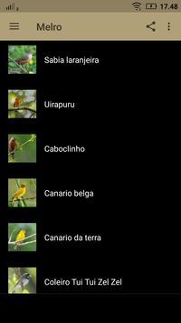canto de melro Canto Passaro Preto apk screenshot