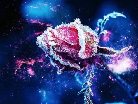 Rose Wallpapers screenshot 12