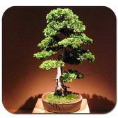Ornamental Plants Bonsai icon