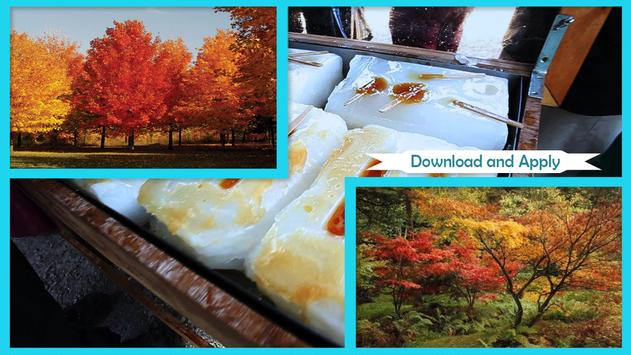Maple Syrup Festival Live Wallpaper poster