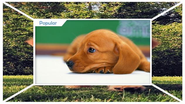 Puppies Live Wallpaper HD screenshot 1