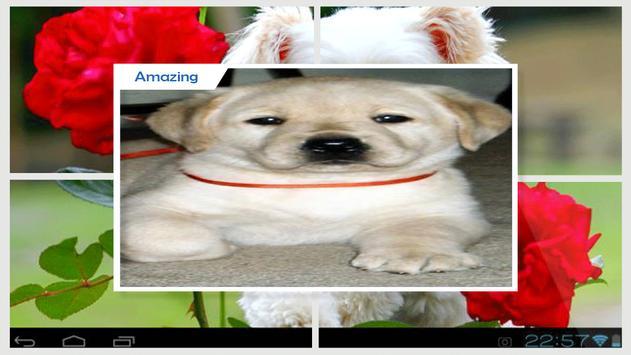 Puppies Live Wallpaper HD apk screenshot