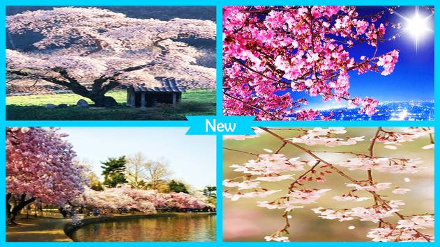 Sakura Cherry Blossoms Live Wallpaper screenshot 3