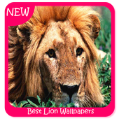 Best Lion Wallpapers icon