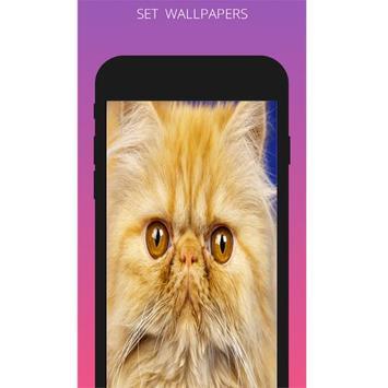 Cat Wallpapers 2018 apk screenshot