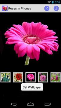 Phone Wallpaper of Roses poster