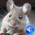 Mouse Sounds Ringtones