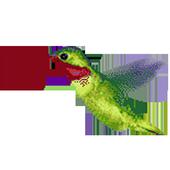 Humming Bird icon