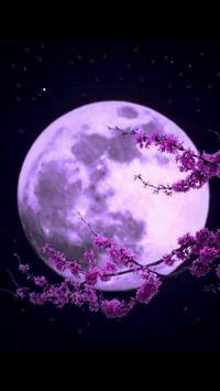 Beautiful Moon Photo Collection screenshot 2