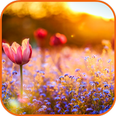 Flower Field Pictures icon