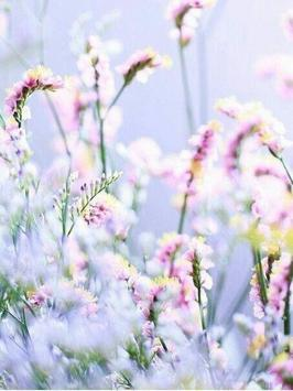 Flower Field Pictures screenshot 2