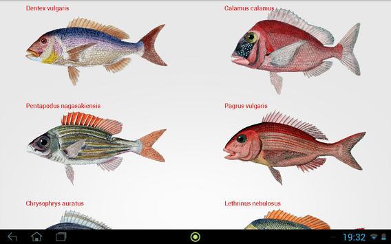 Fishes apk screenshot