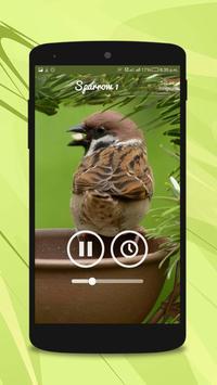 Sparrow Sounds screenshot 2