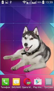 Husky Widget/Stickers apk screenshot