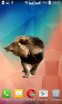 Lion Widget/Stickers apk screenshot
