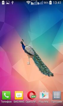 Peafowl (Peacock) Widget apk screenshot